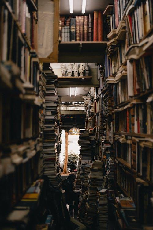 Бесплатное стоковое фото с библиотека, в помещении, грести, книги
