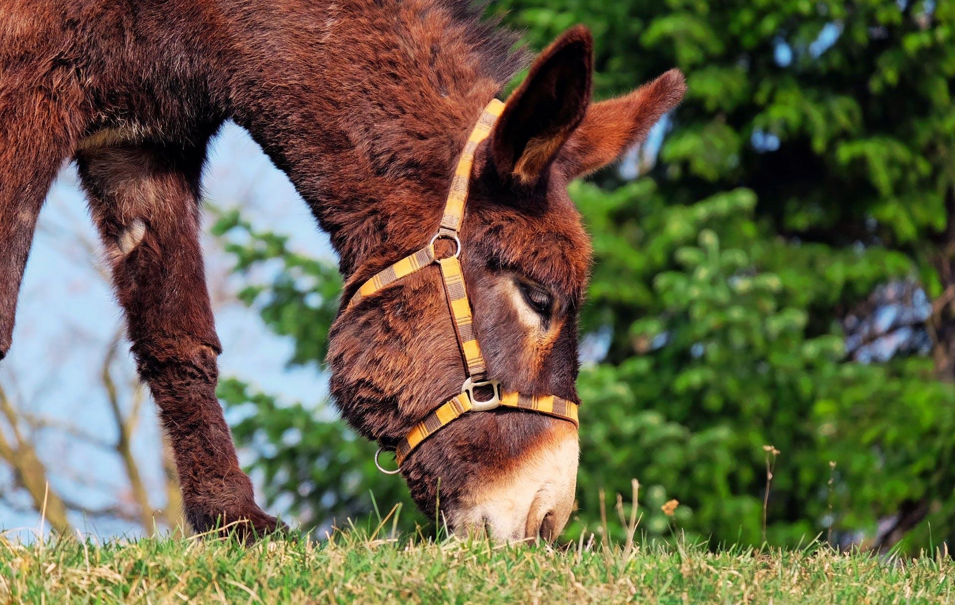 Imagine de stoc gratuită din adorabil, animal, arbore, asin