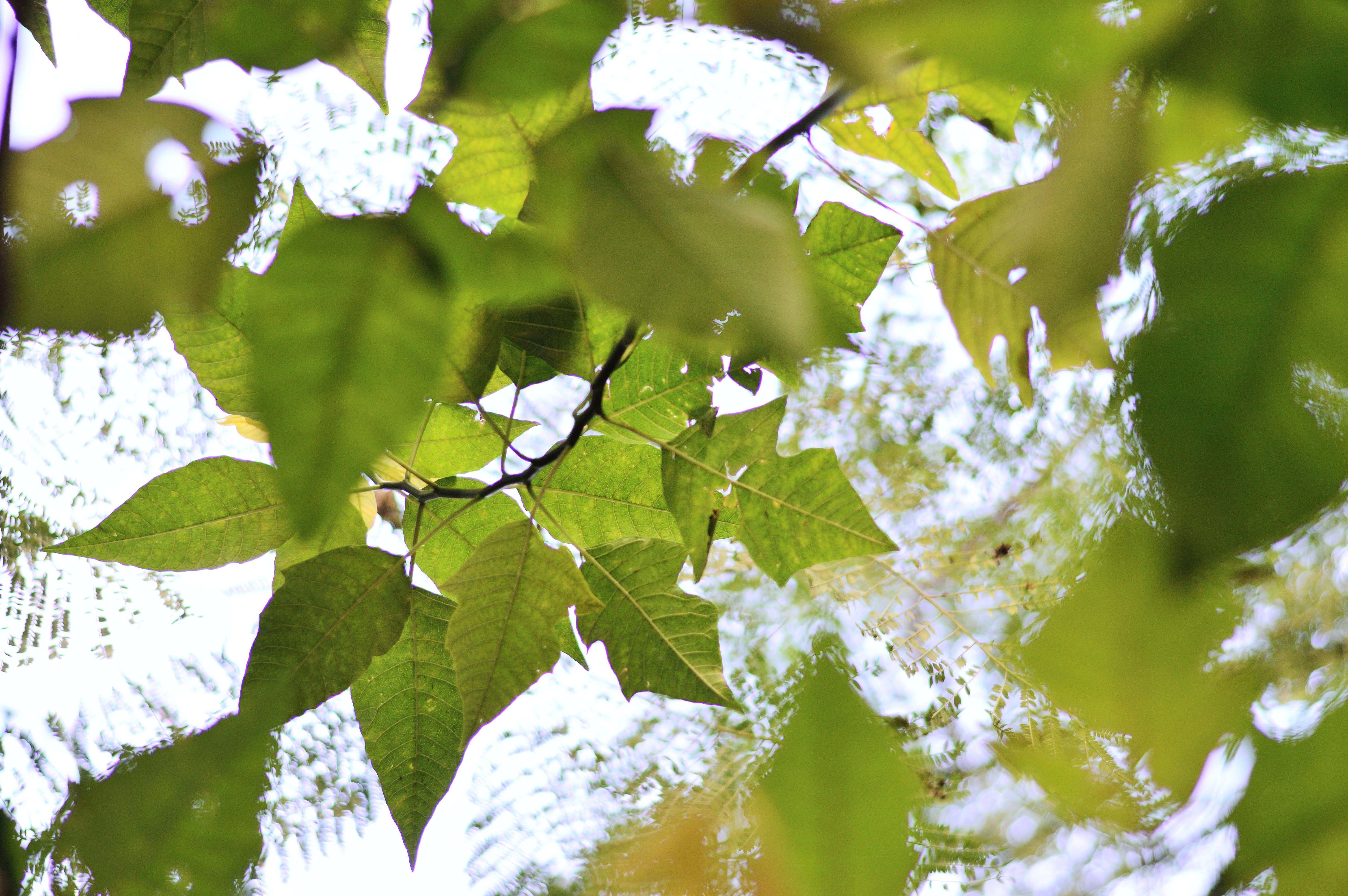 ağaçlar, bulanıklık, çevre, dallar içeren Ücretsiz stok fotoğraf