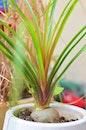 plant, pot, blur