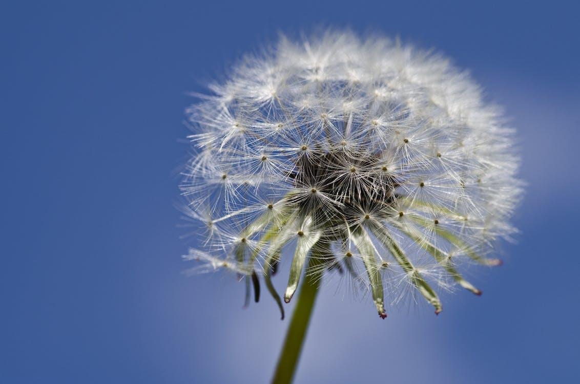 blauwe lucht, bloeien, bloeiend