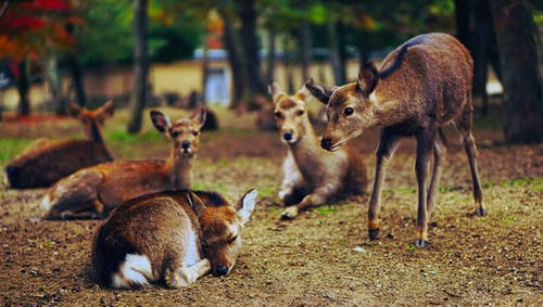 Darmowe zdjęcie z galerii z dzika przyroda, jeleń, trawa, uroczy