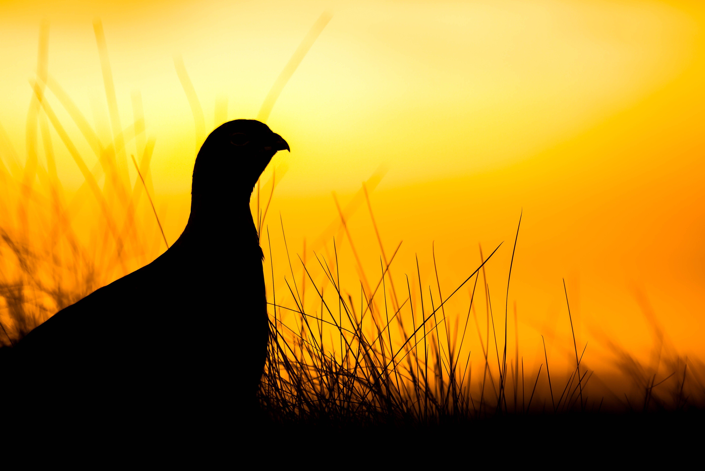 Silhouette Bird Against Romantic Sky at Sunset