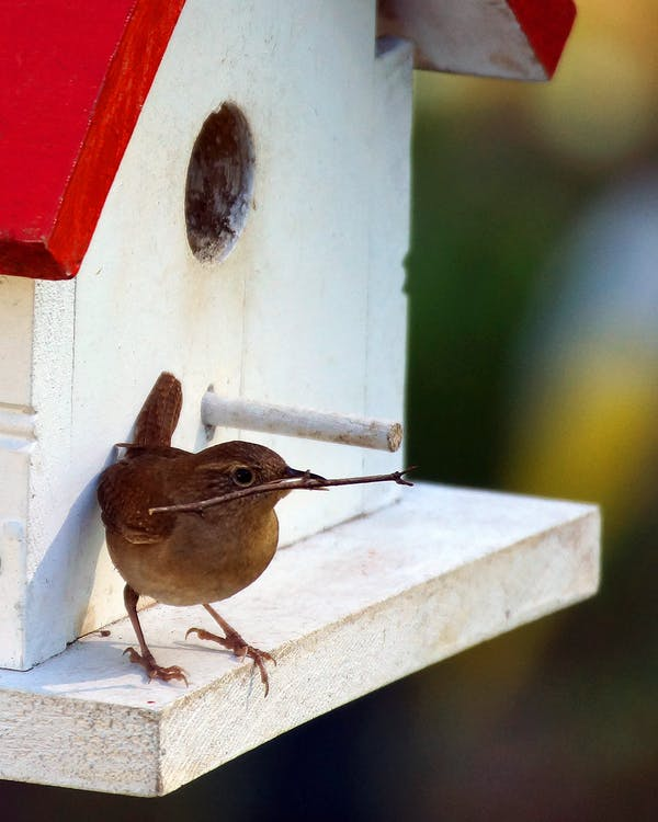 Selective Focus Photo of House Wren Perched on White Birdhouse