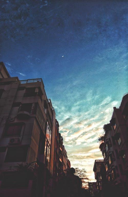açık hava, ağaçlar, akşam, akşam karanlığı içeren Ücretsiz stok fotoğraf