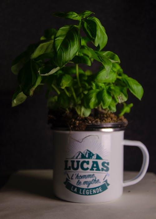 Бесплатное стоковое фото с ботанический, в помещении, выращивать, горшок