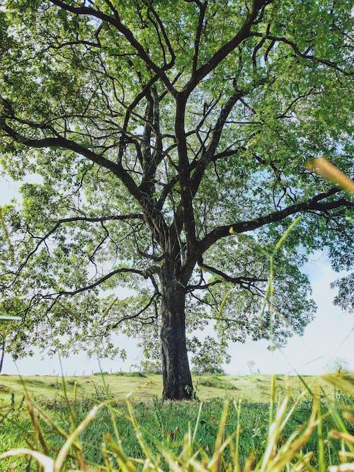 パーク, 日光, 木の幹, 樹皮の無料の写真素材