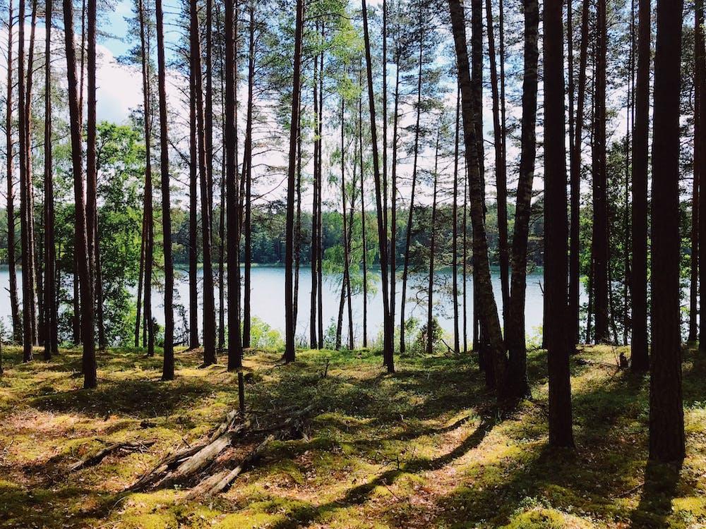erdő, faágak, fák