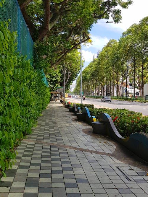 Imagine de stoc gratuită din calm, drum, frumusețe în natură, mașină stradală