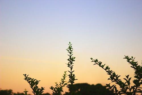 Gratis arkivbilde med solnedgang, tre
