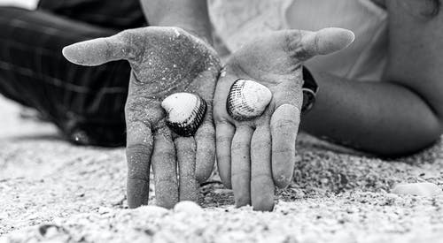 Person Holding Shells