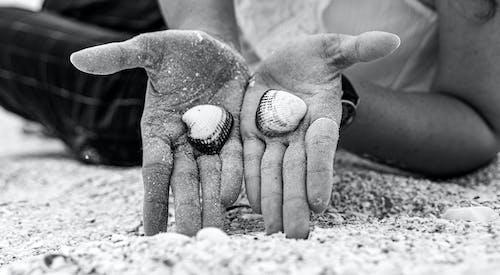 Fotos de stock gratuitas de arena, blanco y negro, concha de mar, conchas