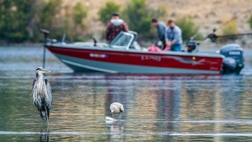 açık hava, ağaçlar, Balık tutmak, balıkçıl içeren Ücretsiz stok fotoğraf