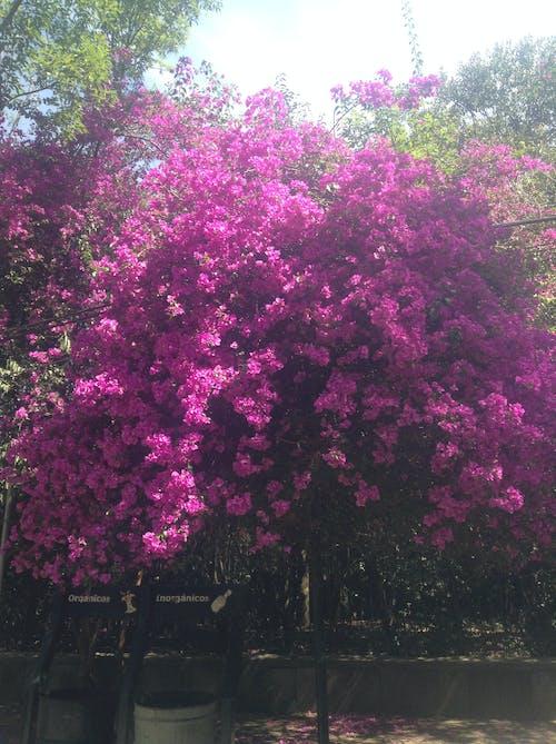 Fotobanka sbezplatnými fotkami na tému Central Park, farby jesene, jacaranda, kmene stromov