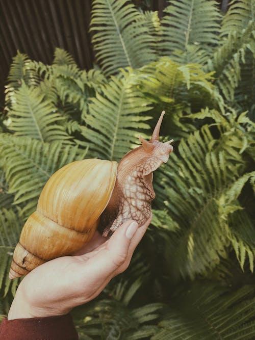 Бесплатное стоковое фото с беспозвоночный, Биология, держать, дикая природа