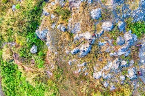 Fotos de stock gratuitas de abstracto, aéreo, agua, árbol