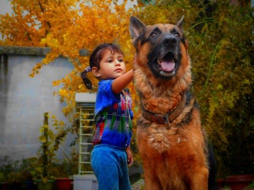 傑曼謝弗, 可愛的, 可愛的女孩, 可愛的小女孩的狗 的 免費圖庫相片