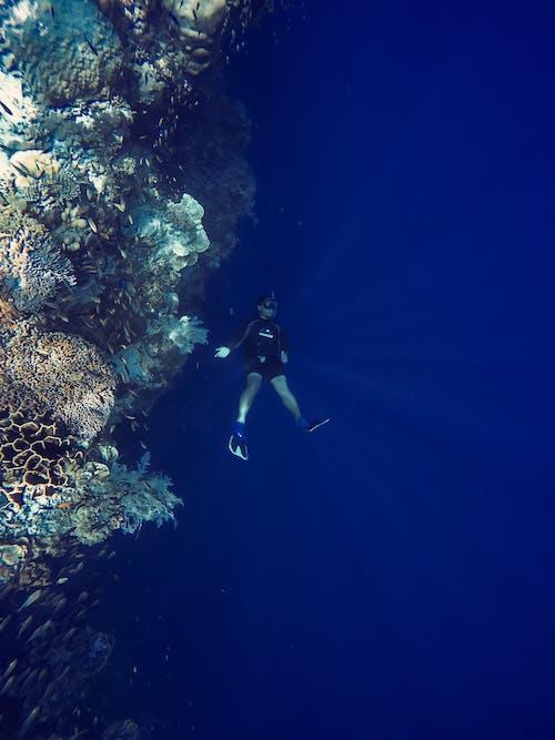 フリーダイブ, 海洋, 深海, 飛び込むの無料の写真素材
