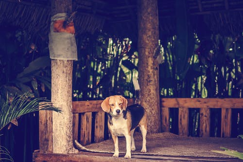 Photo of of Little Dog Standing on Wooden Platform