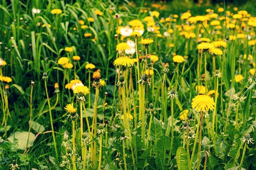 Yellow Petaled Flower Field On Focus Photography