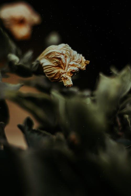 คลังภาพถ่ายฟรี ของ การถ่ายภาพธรรมชาติ, ความงามในธรรมชาติ, ดอกสีเหลือง, ดอกไม้สีเหลือง