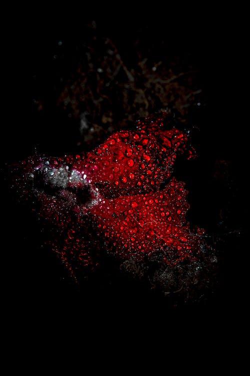 Photos gratuites de #flower #abstract #macro #fresh #nature #detail