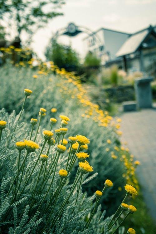Lote De Flores De Pétalos Amarillos