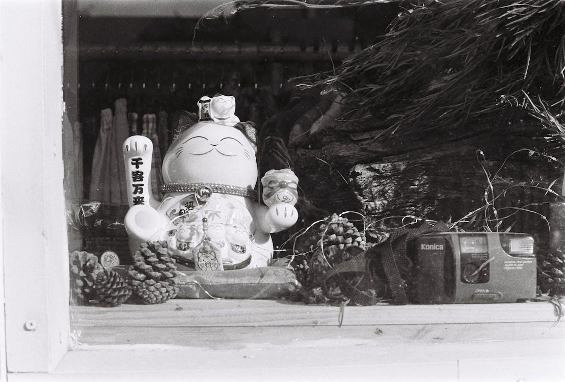 blanco y negro, cámara, concentrarse