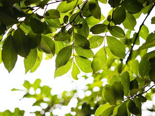 Бесплатное стоковое фото с дерево, завод, зеленый, листья
