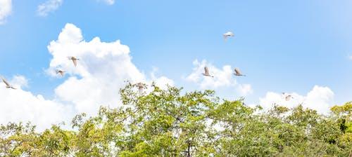 Free stock photo of birds, blue skies, flying