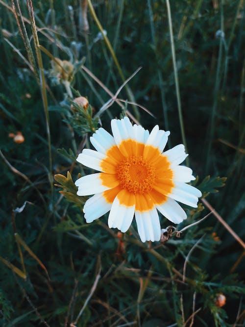 Δωρεάν στοκ φωτογραφιών με γλάστρες, κορίτσι των λουλουδιών, λευκό λουλούδι, λουλούδι πουλιών του παραδείσου