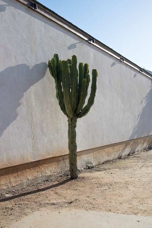 kaktus, kasvi, muuri