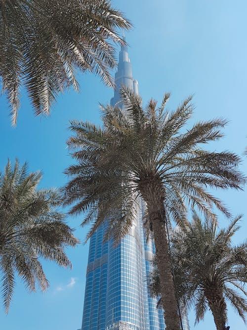 Immagine gratuita di alberi, burj khalifa, dubai, grattacielo