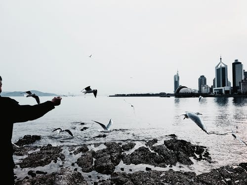 Person feeding seagulls on city embankment