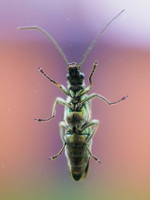 Бесплатное стоковое фото с beetle, максросъемка, насекомое, окно