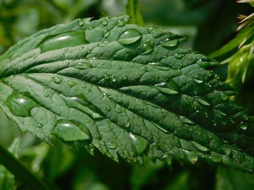 Immagine gratuita di gocce di pioggia a vista ravvicinata
