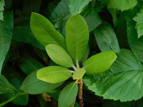 Immagine gratuita di foglie verdi