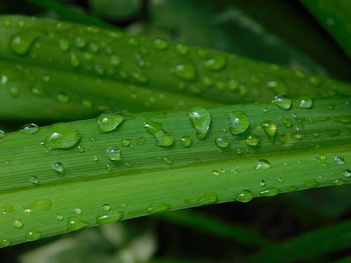 Immagine gratuita di gocce di pioggia sulle foglie