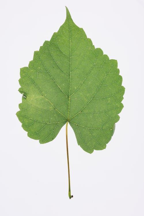 Foto stok gratis daun, hijau