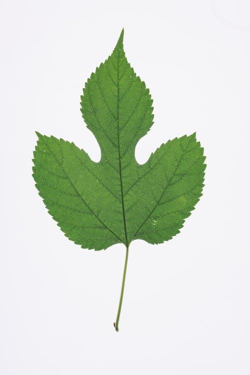 Зеленый лист
