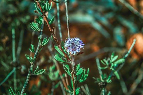 Imagine de stoc gratuită din floare frumoasa, plante cu flori, verde