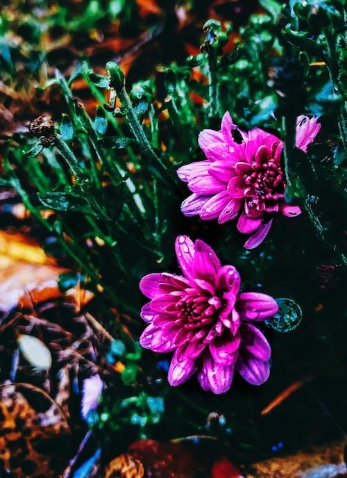 Fotobanka sbezplatnými fotkami na tému #kvetina, #mobilechallenge, #nature, #outdoorchallenge