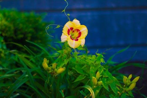 Fotobanka sbezplatnými fotkami na tému žltý kvet