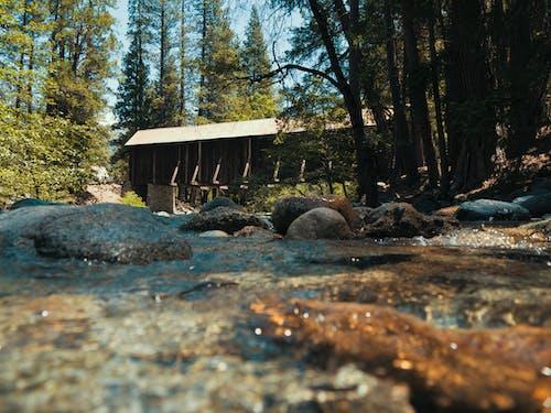 Free stock photo of bridge, california, forest