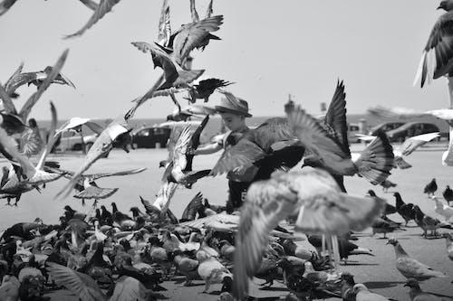 Ilmainen kuvapankkikuva tunnisteilla bw, childeren, lapsi, lintu