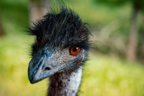 Selective Focus Close-up Photo of Emu Head