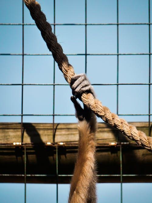 動物, 握住, 猴子 的 免费素材照片