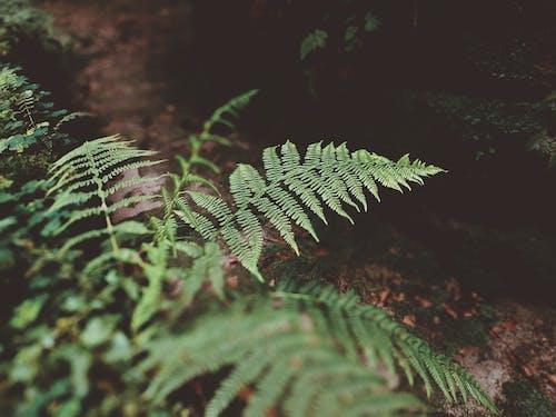Foto d'estoc gratuïta de a l'aire lliure, botànic, brillant, colors