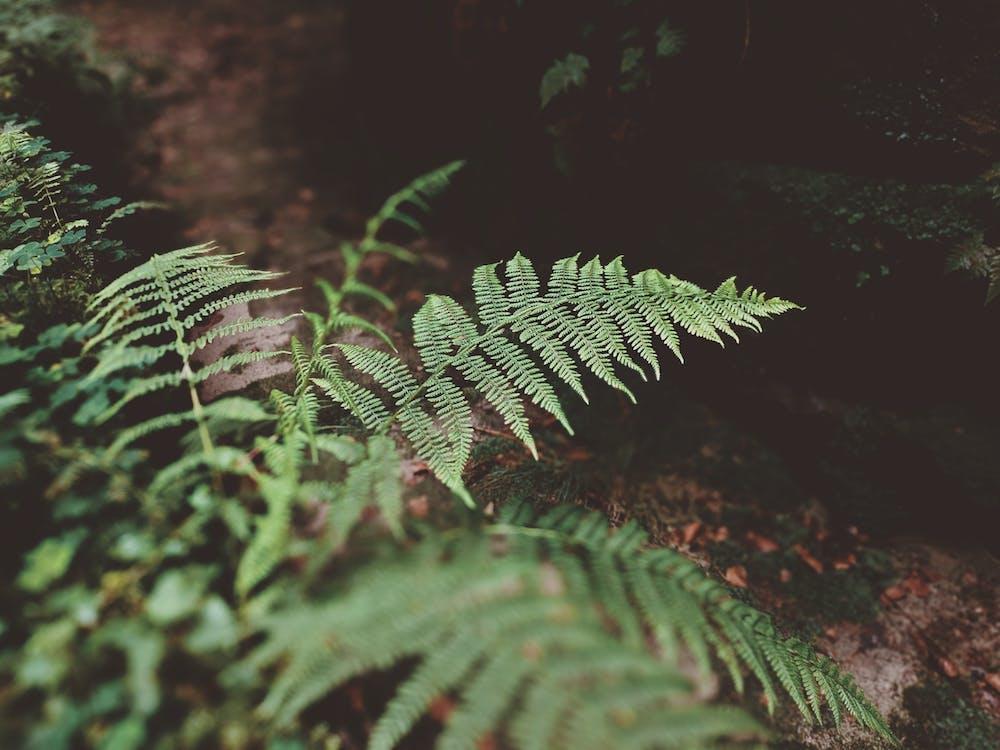 alam, alami, berfokus