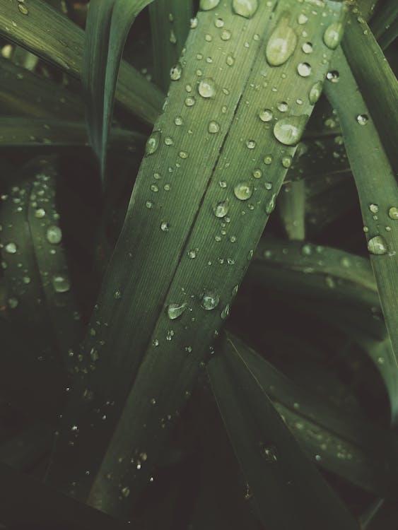 frunze, frunziș, grădină